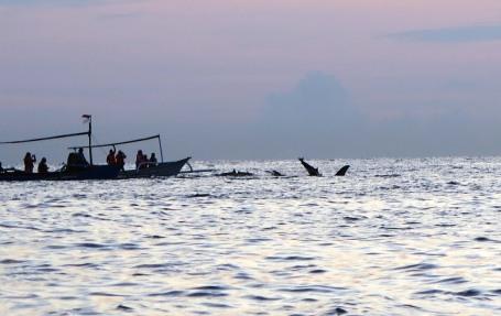 Tur lumba-lumba di Lovina (foto Darma Putra)